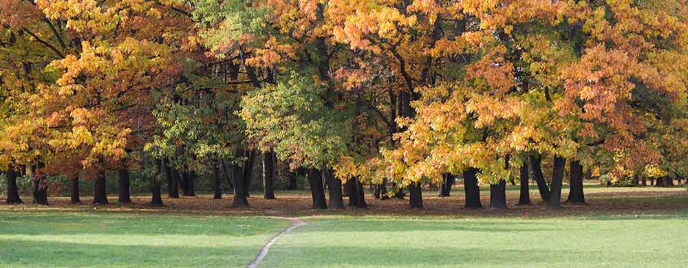 Live in Grand Blanc Township Michigan and Enjoy Green Parks and Recreation