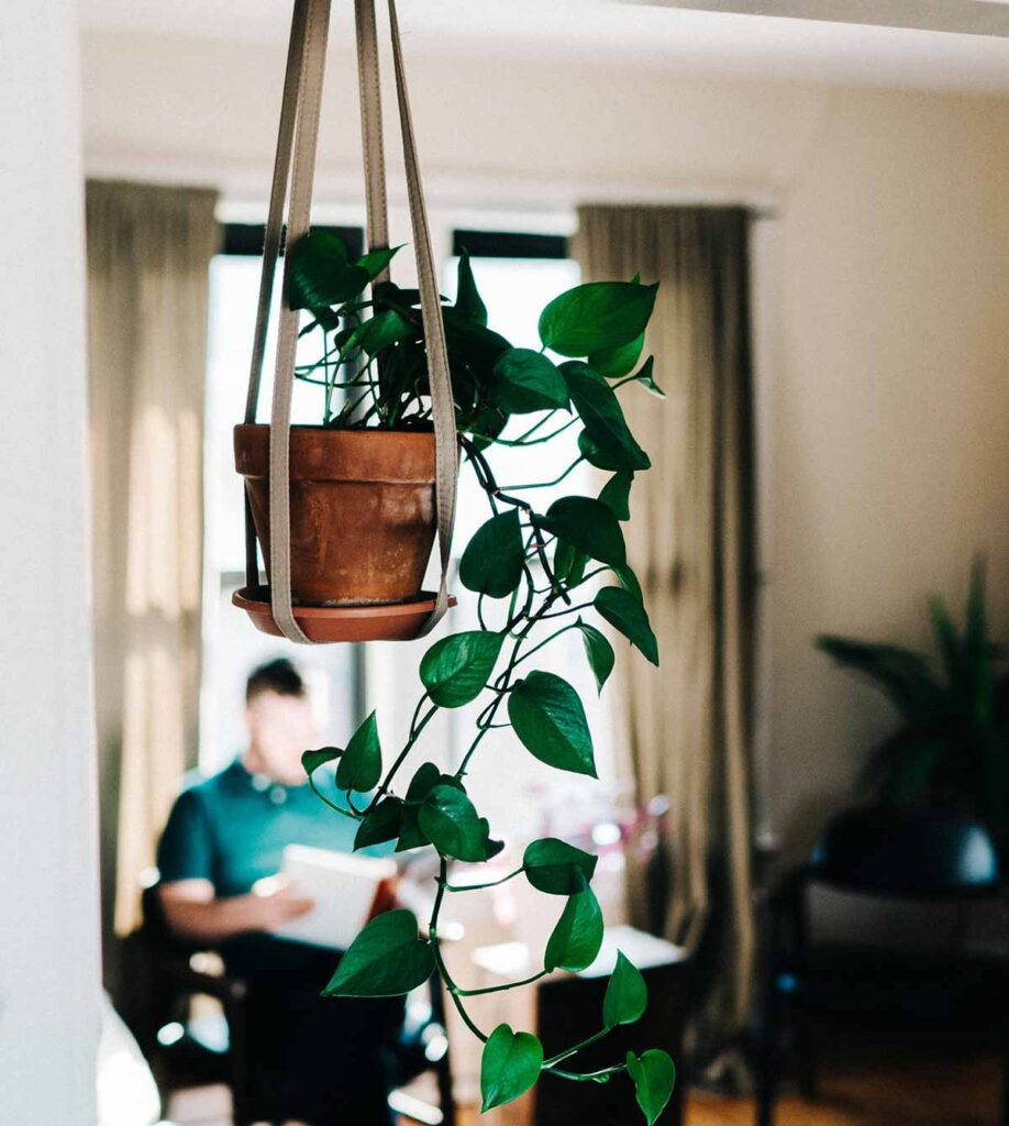 hanging houseplant