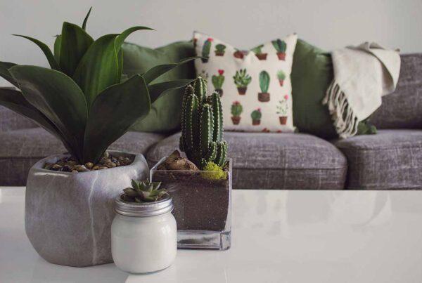 houseplants on your coffee table