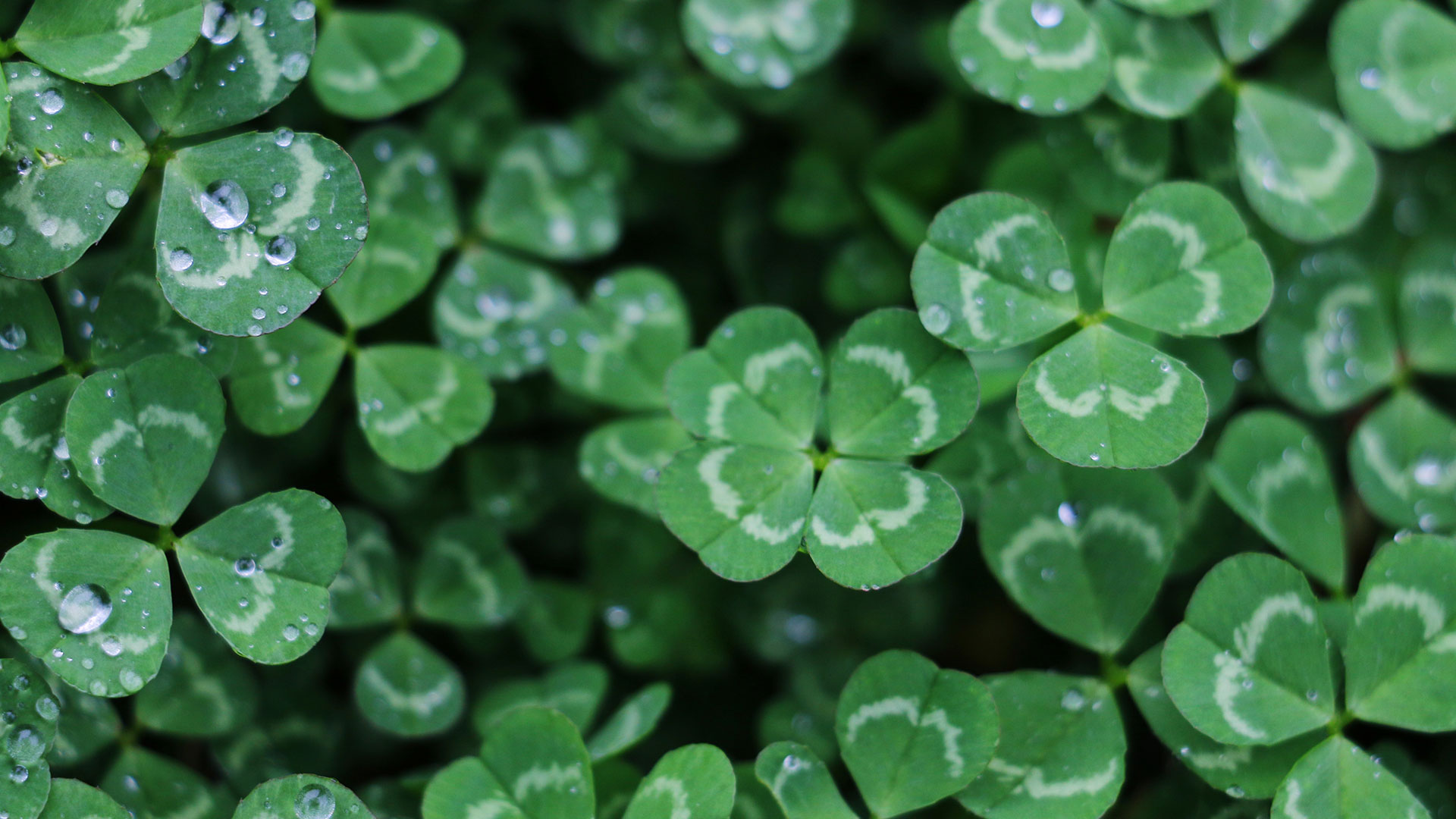 5 Ways to Celebrate St. Patrick's Day from the Comfort of Your Home