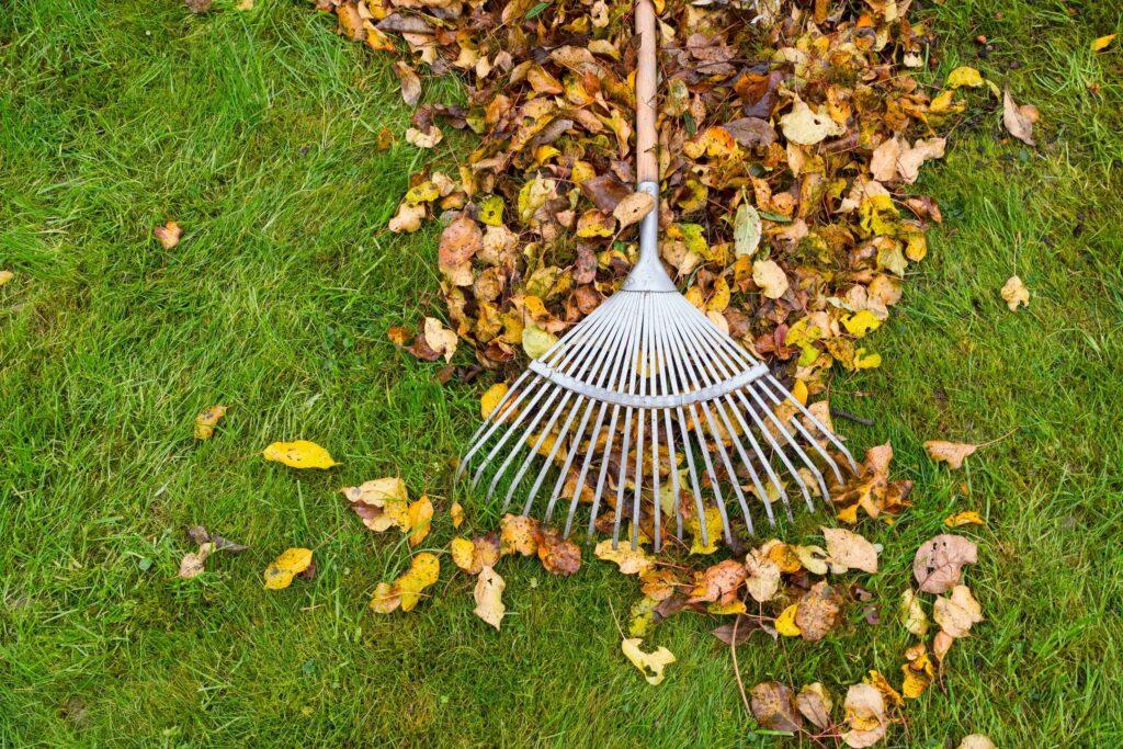 lawn landscape chores