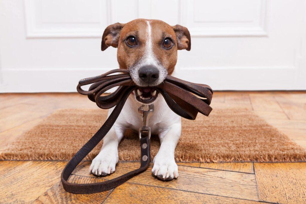 apartment rental pet policy