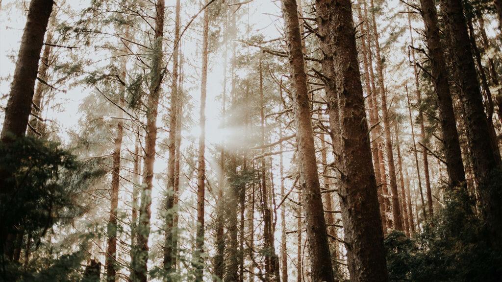 rewdood-career-growth-trees