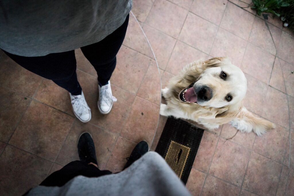 pet friendly greenville area apartment rentals