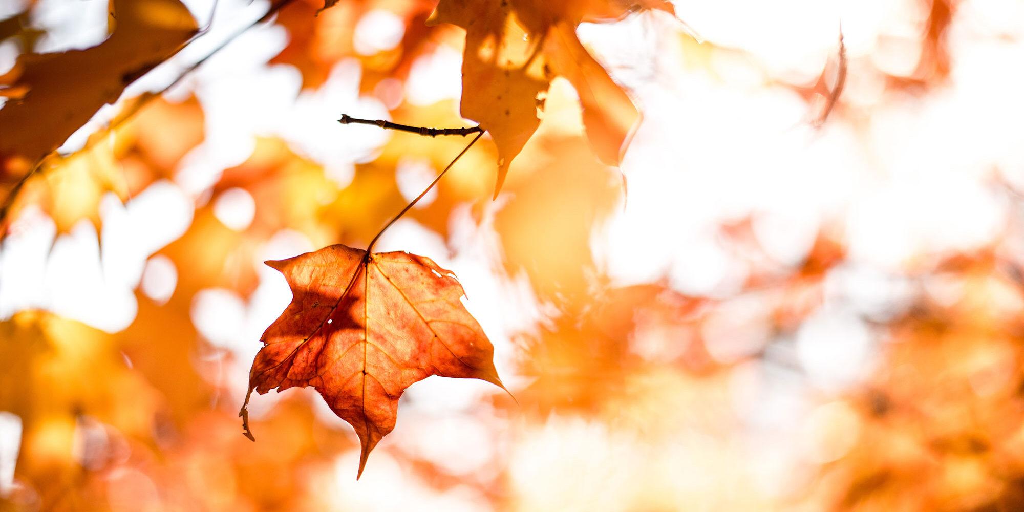 fall-redwood-living-inc-header-RAM