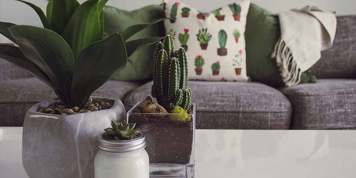 houseplants on your coffee table